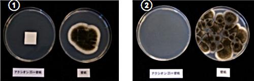 Aspergillus niger IFM 54309